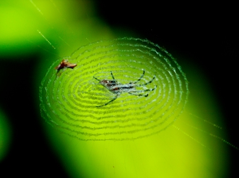 Nature detail, Thailand